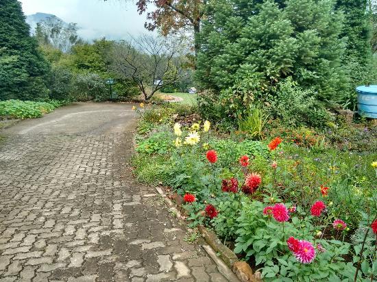 Foto de le jardin parque de lavanda gramado le jardin for Jardines de lavanda