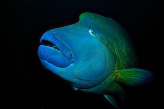 Faafu Atoll: Big Fish