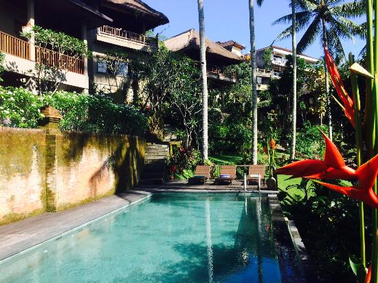 The Kampung Resort Ubud: Swimming Pool