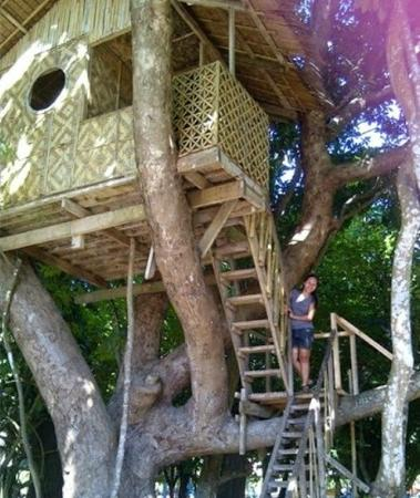 Canigao Island: have a sweet dream on top of the tree