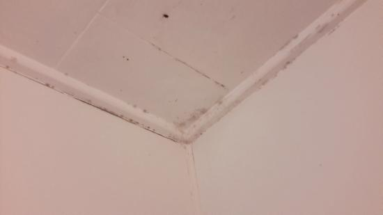 Bay Beauty Motel: bathroom ceiling
