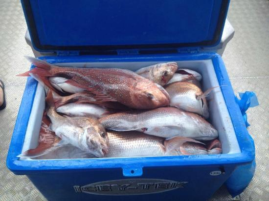 Warkworth, Yeni Zelanda: Another great Snapper trip with Sandspit fishing charters