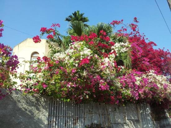 La Rosa de Ortega: From the outside