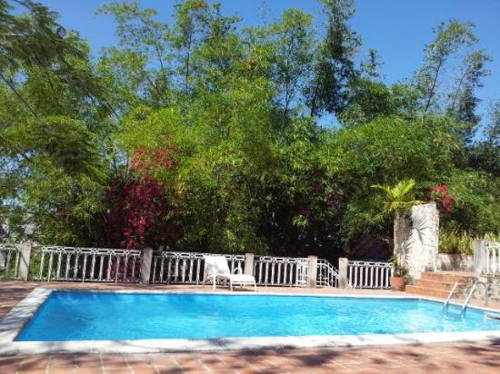 La Rosa de Ortega: The swimmingpool with bamboo trees