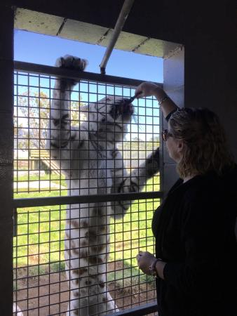 Pouakai Zoo: Must do if you are at the Zoo, awesome feeling ��
