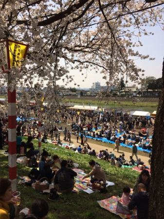 Shiroishigawa Embankment Hitome Sembonzakura: Spring scenery 3