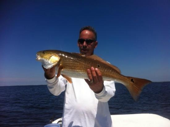 Saltwater Assassin Fishing Charters: Redfish