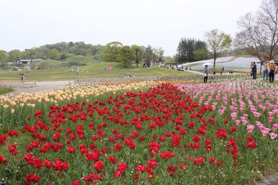 Sanuki Manno Park: 讃岐まんのう公園