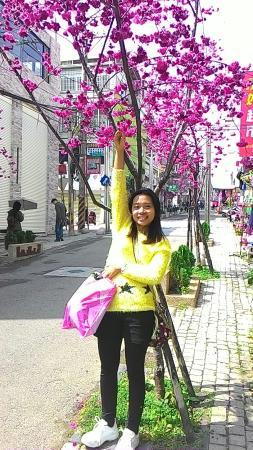 Longjing, Taichung: Sakura flower