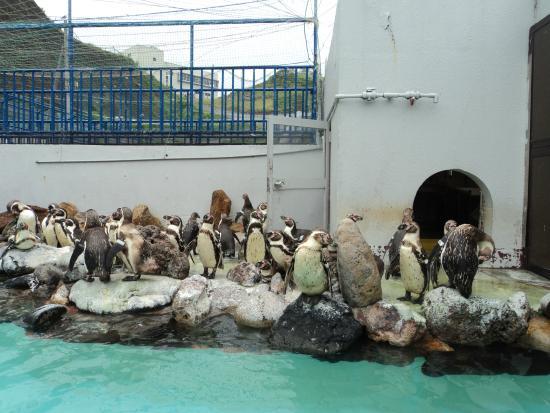 Аквариум Отару - 小樽市、おたる水族館の写真 - トリップアドバイザー