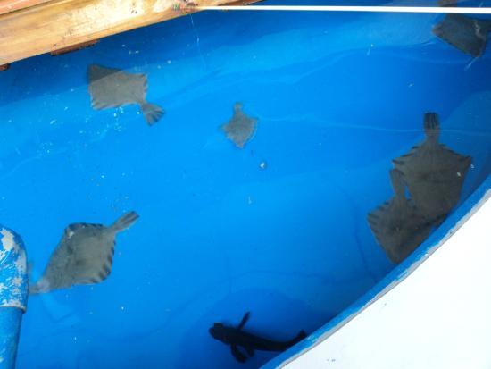 Рыбалка - Picture of Otaru Aquarium, Otaru - TripAdvisor