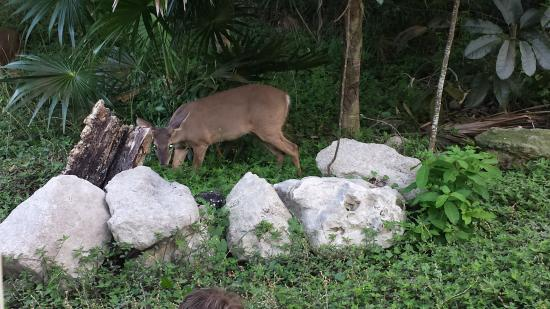 We Saw Deer Monkeys Lots Of Iguanas And A Couple