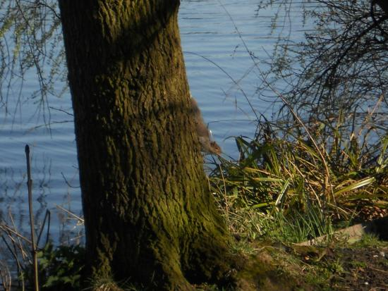 Carr Mill Dam: Squirrel