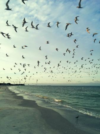Algiers Gulf Resort: My morning run along Treasure Island.