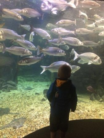 photo3.jpg - Picture of Anglesey Sea Zoo Sw Mor Mon, Brynsiencyn ...