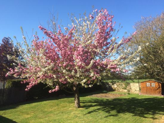 Cerisiers en fleurs au printemps autour du restaurant photo de les 4 saisons voulmentin - Greffe du cerisier au printemps ...