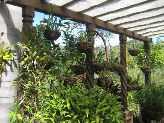 So Much Greenery In Walkways And Wild Forest Pathways Picture Of Vallarta Botanical Gardens