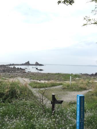 Mitsuishi Beach: 花が咲いていてきれいでした