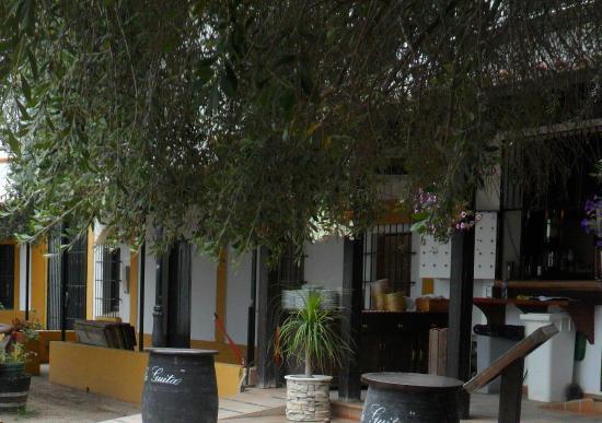 Restaurante Toruno: Terraza bajo los acebuches centenarios