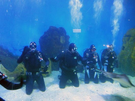 Shark Dive Xtreme Melbourne Aquarium