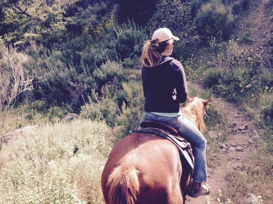 all the pretty horses essay all essay topics