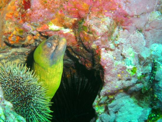 North Island, Yeni Zelanda: Moray Eel