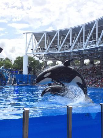 SeaWorld Orlando : photo1.jpg