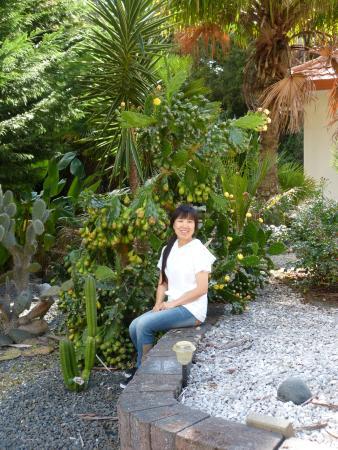 Tealmere Grove B&B: Garden 1