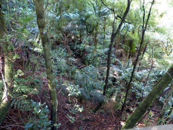 Whangarei, Nueva Zelanda: Sub tropical flaura and fauna