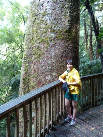 Whangarei, Nueva Zelanda: Big tree again