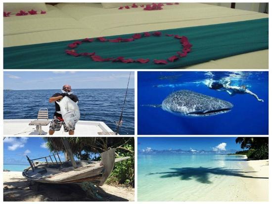 Faafu Atoll : APQUO Veli Hotel