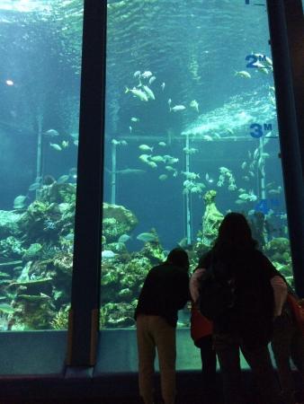 Tokai University Marine Science Museum: 東海大学海洋博物館