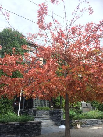 Albert Heights Serviced Apartments: Autumn is a great time of year. The tree lined street the building is on looked lovely in April