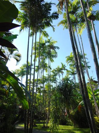 Bumi Ayu Bungalows: Tall palm trees at the hotel