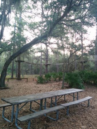 Bradenton, FL: trees and more trees!