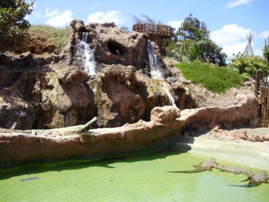 Up close! - Picture of Rancho Texas Lanzarote Park, Puerto Del Carmen - TripA...
