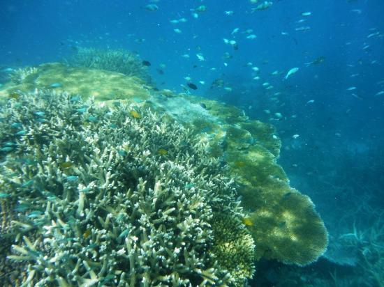 Great Barrier Reef : GBR Snorkeling