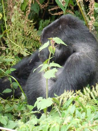 Kabale, Uganda: Bwindi Impenetrable National Park