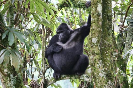 Кабале, Уганда: Bwindi Impenetrable National Park