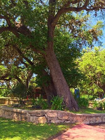 Fort Clark Springs: photo4.jpg