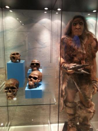 National Museum of Antiquities (Rijksmuseum van Oudheden) : ice age exhibition
