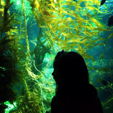 View From Tide Pools Picture Of Birch Aquarium At