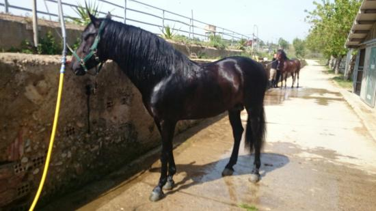 Reus, Spain: Stunning horses xx