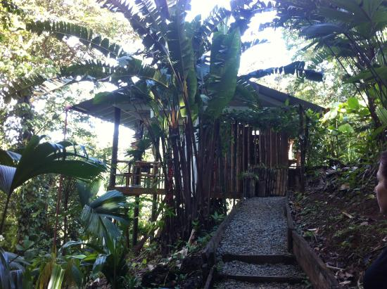 La Loma Jungle Lodge and Chocolate Farm: Cabin #4
