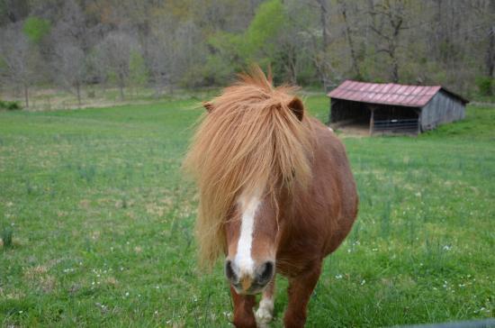 Fairhill Farm: Another pony