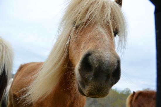 Fairhill Farm: One of the ponies :)