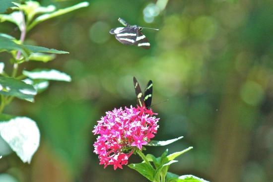 Mariposas Garden Garden Ftempo