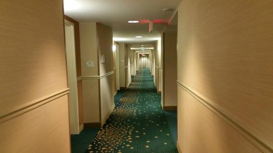 Hallway at Hilton Garden Inn Columbia MD Picture of Hilton
