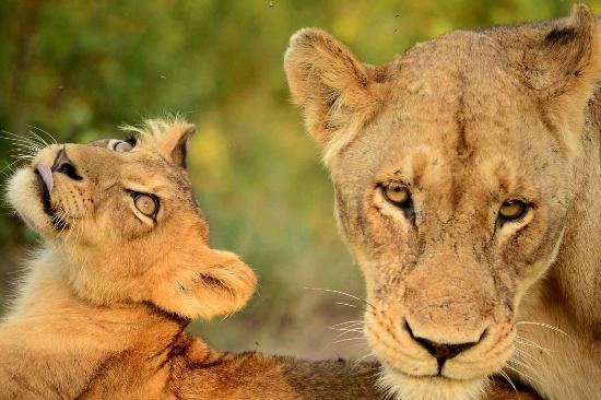 game viewing at africa on foot クラセリー自然保護区 africa on