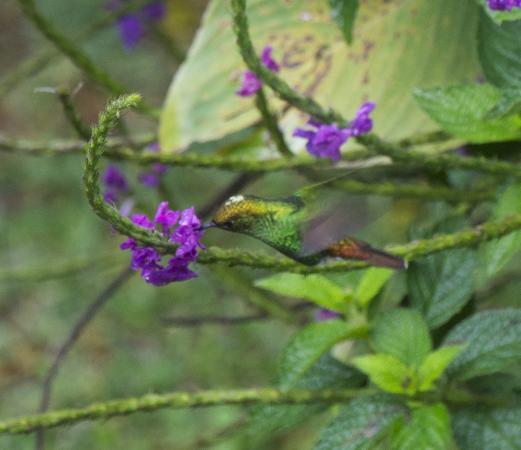 Mariposa Bed & Breakfast: Mariposa-nature
